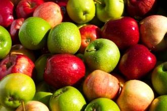 Около 20 тыс. тонн польских яблок попало в Россию по молдавским сертификатам
